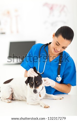 young female veterinarian checking dog ear - stock photo