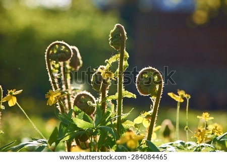 Young fern plants with back sunlight - stock photo