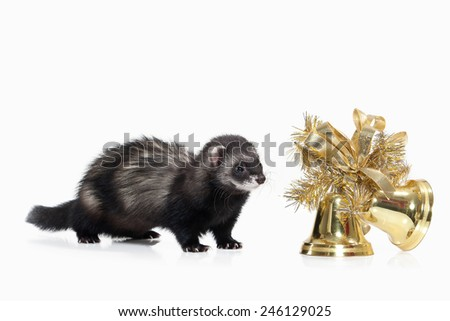 Young ferret isolated on white background - stock photo