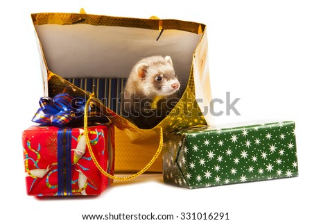 young ferret with Christmas gifts isolated on white background - stock photo
