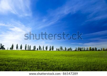 young field of winter wheat on blue sky background - stock photo