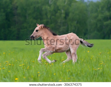 Young filly running in the field of dandelions in moody weather