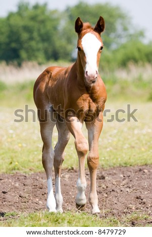 Young Foal - stock photo