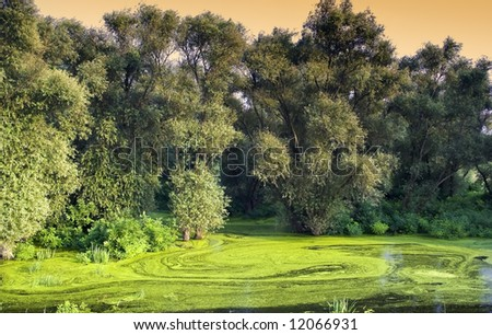 Young forest at the sunset - stock photo