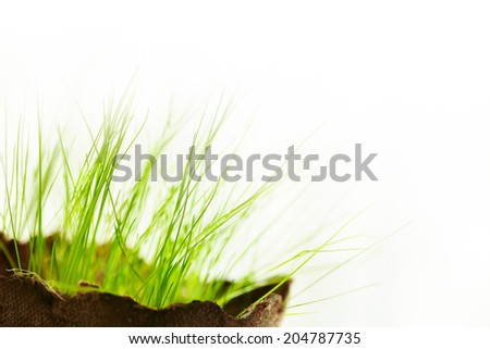 Young fresh grass in pot over white. New life and eco concept. Selective focus. - stock photo