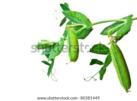 Young fresh green pea pods on a white background