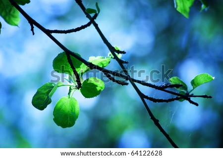 Young fresh leaves of an apple-tree in morning rays of the sun against the sky and wood - stock photo