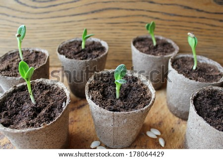 Young fresh seedling  - stock photo
