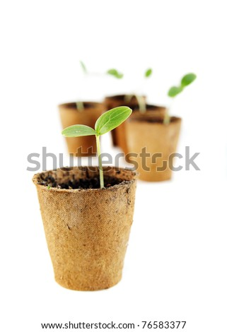 Young fresh seedling stands in peat pots on a white background