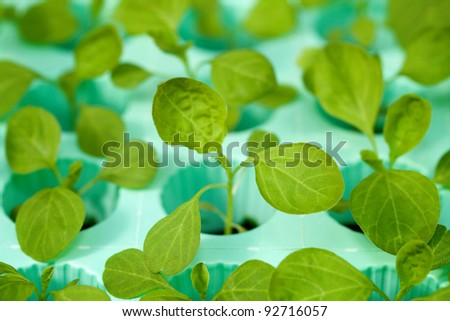 Young fresh seedling stands in pots - stock photo