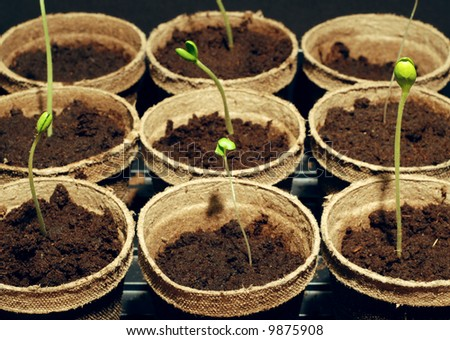 Young garden sprouts started indoors - stock photo