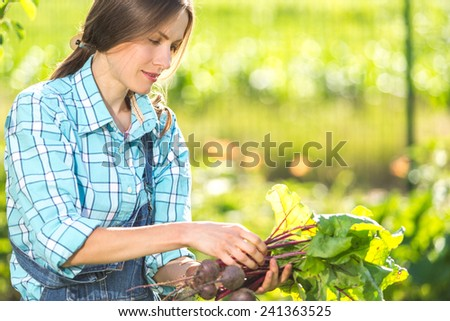 Young gardener carefully picking beetroots looking on her harvest. copy space - stock photo
