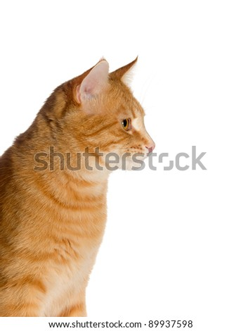 Young ginger cat on a white background - stock photo