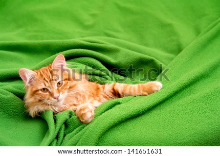 young ginger stripped siberian cat lying on green blanket - stock photo