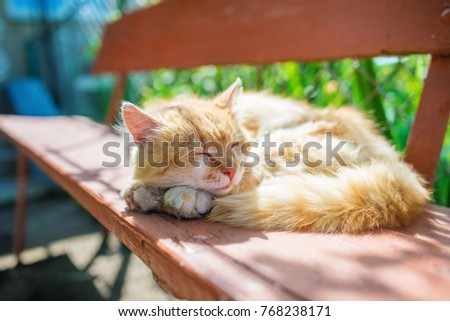young ginger stripped siberian cat sleeping with eyes closed on a wooden bench.