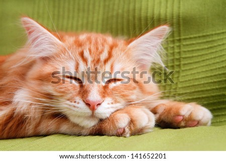 young ginger stripped siberian cat sleeping with eyes closed - on green - stock photo