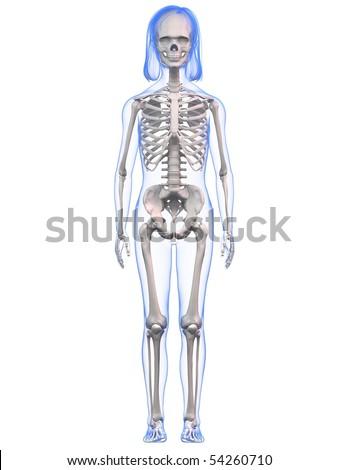 Young Girl Anatomy Skeleton Stock Illustration 54260710 - Shutterstock