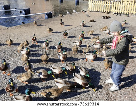 Young girl feeding ducks - stock photo