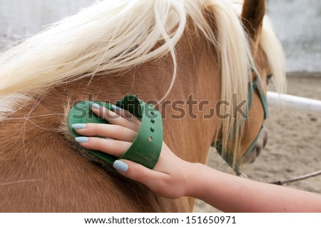 Young girl is grooming the horse - stock photo