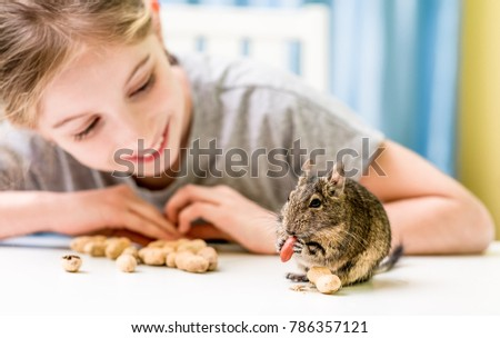 Young girl observe the degu squirrel eats nuts on white table