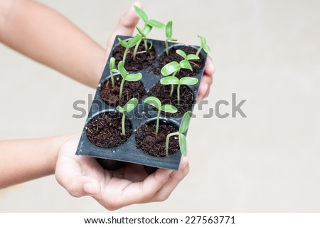 young girl's  hands holding green sprout growing from seed. seed germination. New life, spring and ecology concept - stock photo