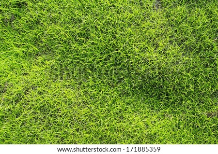 young grass background. - stock photo