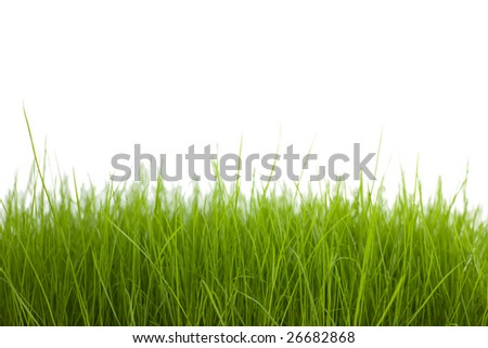 Young grass  on a white background.