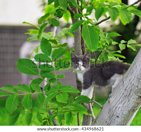 Young gray-and-white kitten climbing on the tree - stock photo