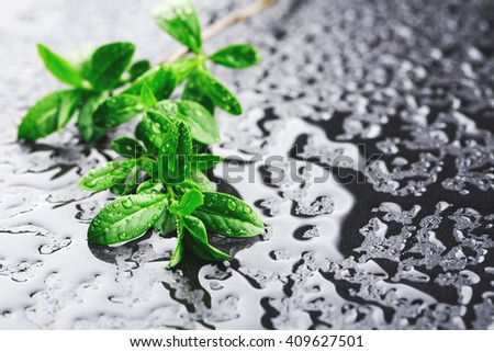 Young green branch with water drops on black stone surface. Eco concept. Macro. Place for text. - stock photo