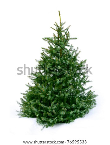 Young green Christmas tree spruce on white snow background - stock photo