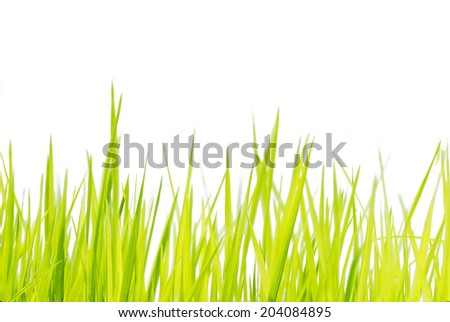 Young Green Grass Pattern on white background - stock photo