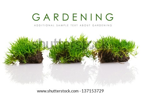 young green grass with soil isolated on white background - stock photo