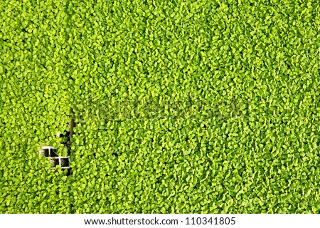 Young green herbs background - stock photo