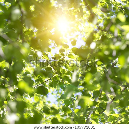 Young green leaves in summer morning - stock photo