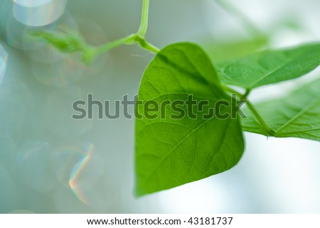 Young green leaves lit by sun. Beautiful bokeh in the background. - stock photo