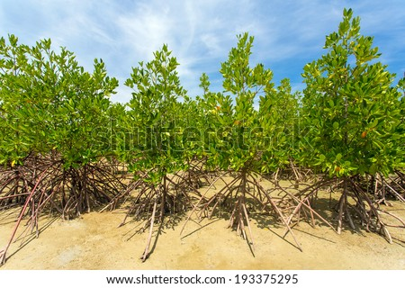 Young green mangrove trees - stock photo