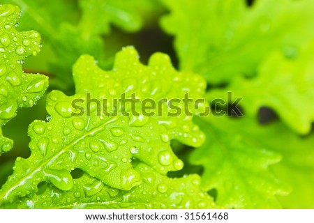 young green oak leaves in the forest - stock photo