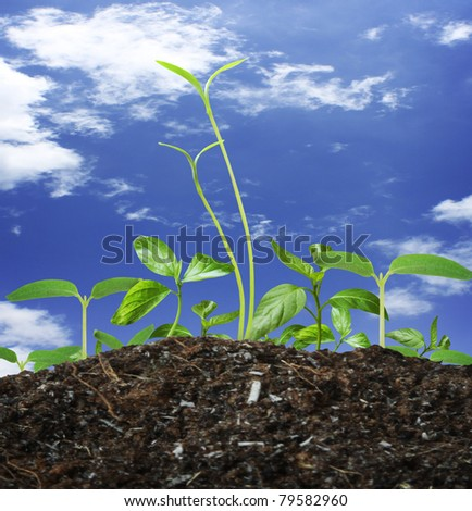 Young green plant - stock photo