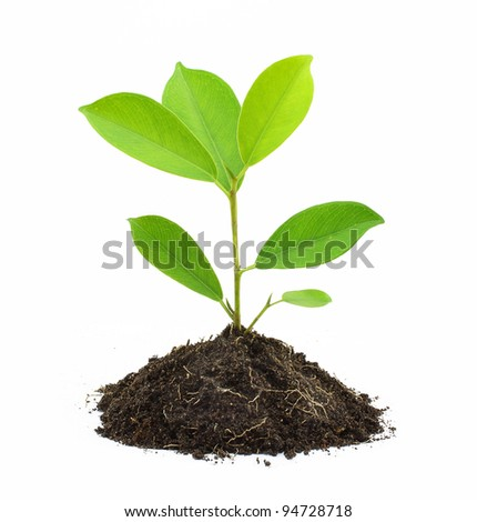 Young Green Plant and Soil Isolated on white background. - stock photo