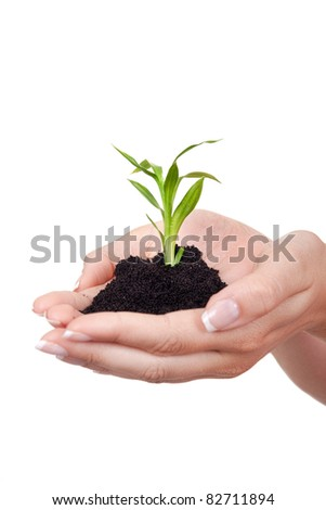 young green plant in hands- isolated on white