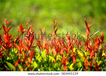Young green plant in the garden - stock photo