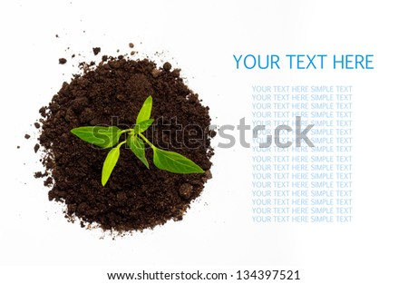 Young green plant isolated on a white background with space for text. top view - stock photo