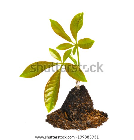 young green plant isolated on white background