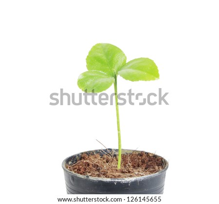 Young green plant on  white background - stock photo