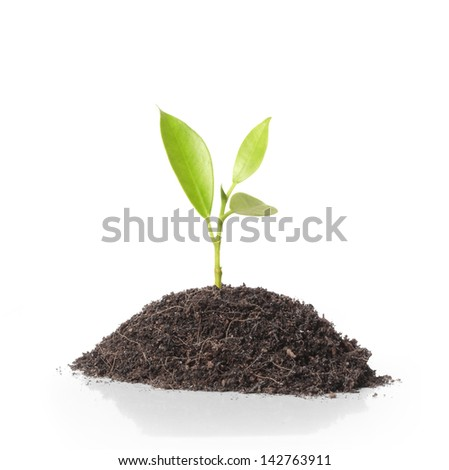 Young green plant on  white background