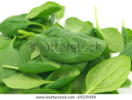 Young green spinach on white