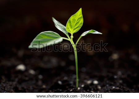 Young green sprout growing in soil closeup - stock photo