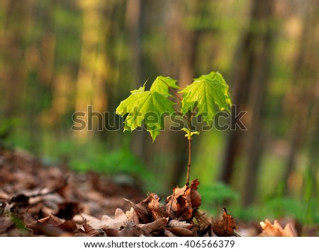 Young green sprout of a tree growing through the fallen leaves on the forest background - stock photo