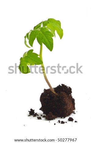 Young green sprout on a white background