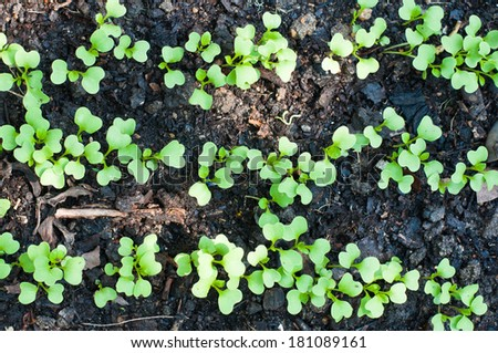 Young green sprout plant growing in the soil - stock photo